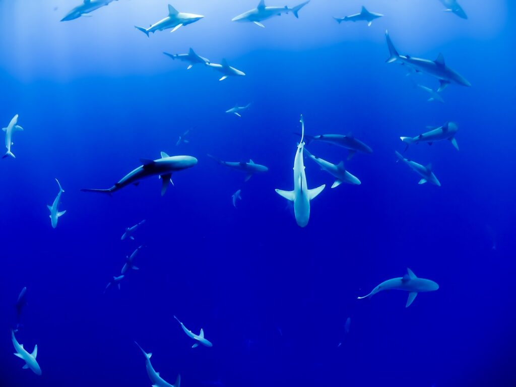 animal, sharks, aquarium