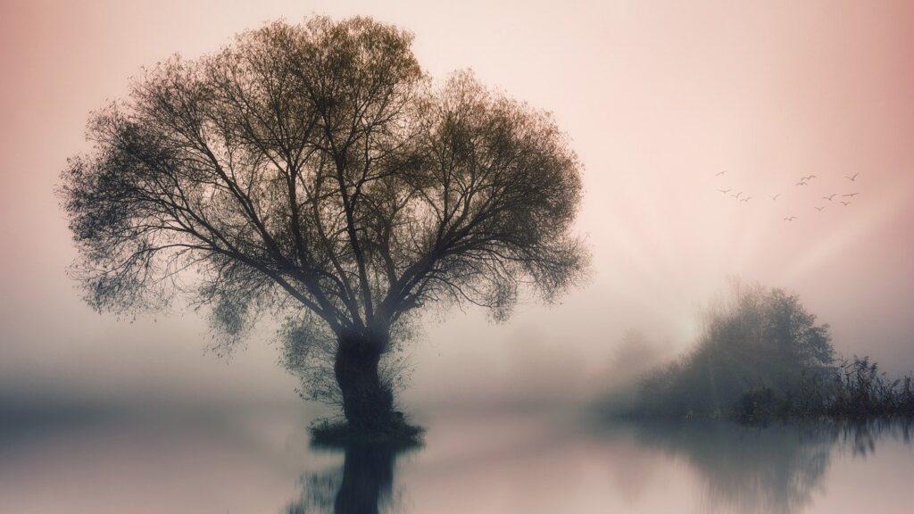 tree, lake, fog